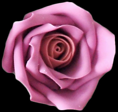 Two toned pink small rose